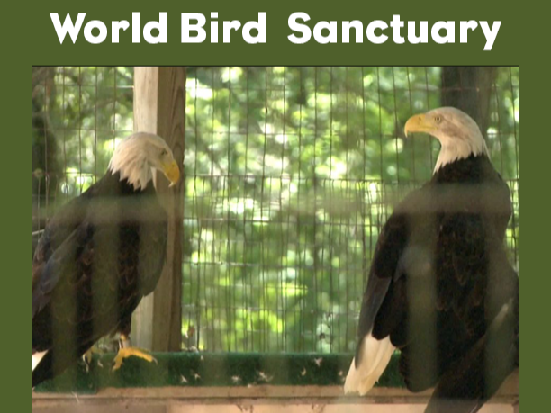 Website World Bird Santuary