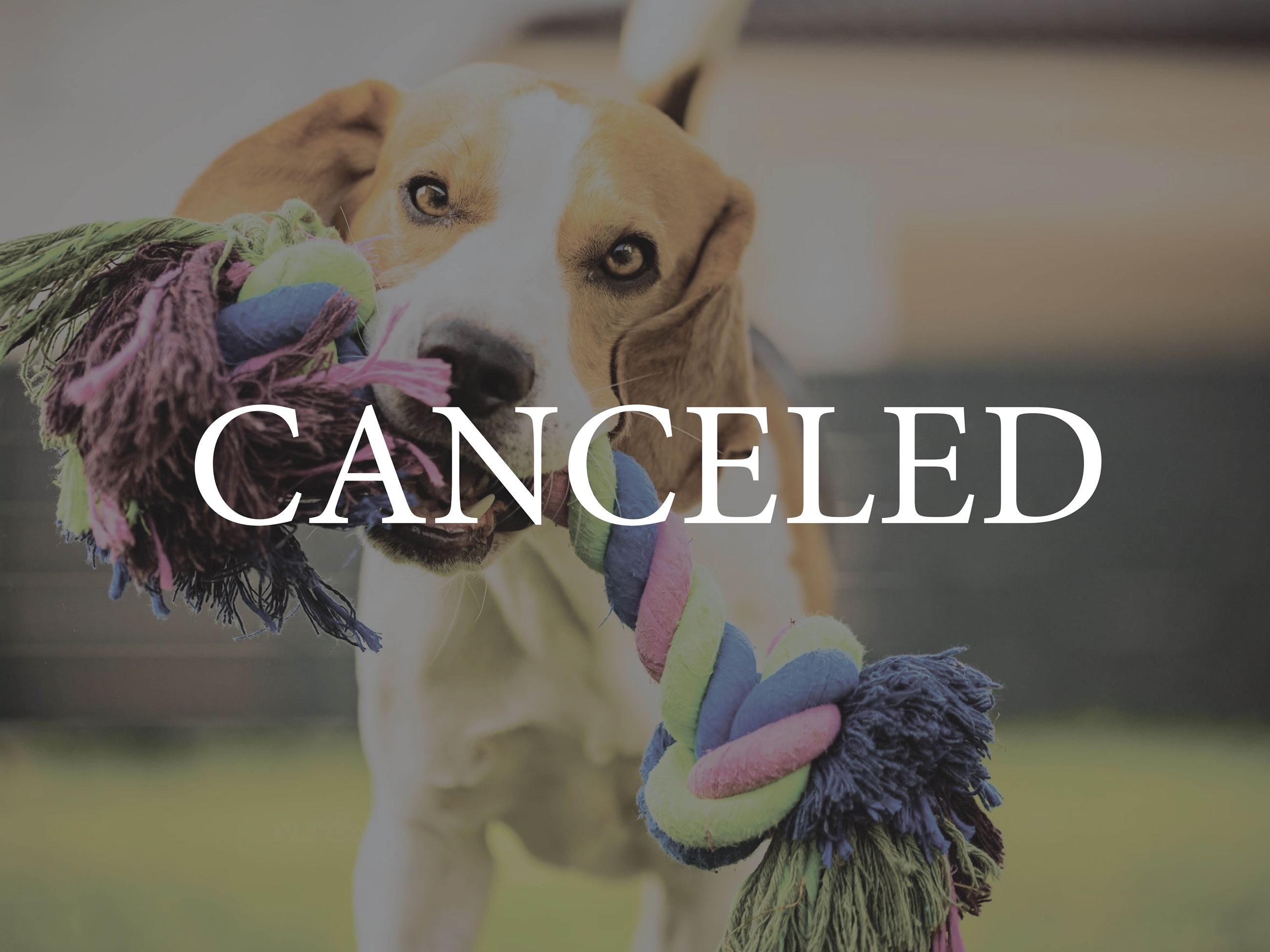 Yappy Hour Canceled