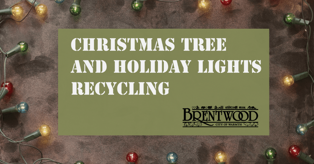 Tree and Light Recycling